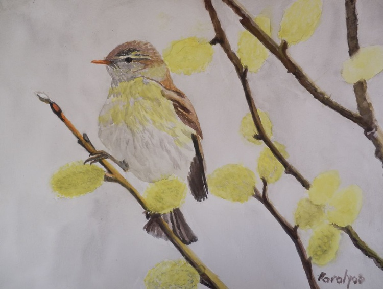 Sparrow in the spring - Image 0