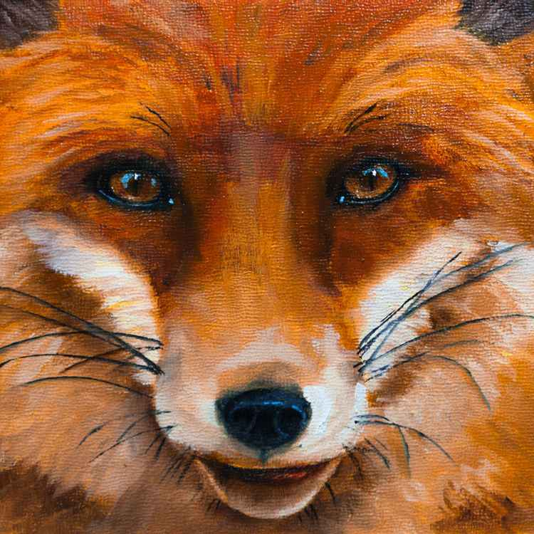 Fox Portrait -