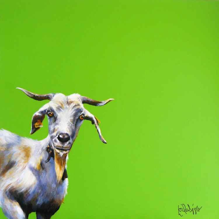 Gomeran Goat -