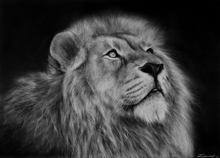 Lion oil painting - Image 0