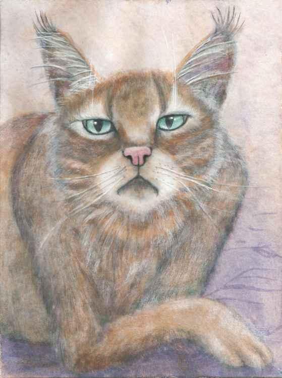 Swamp Lynx -