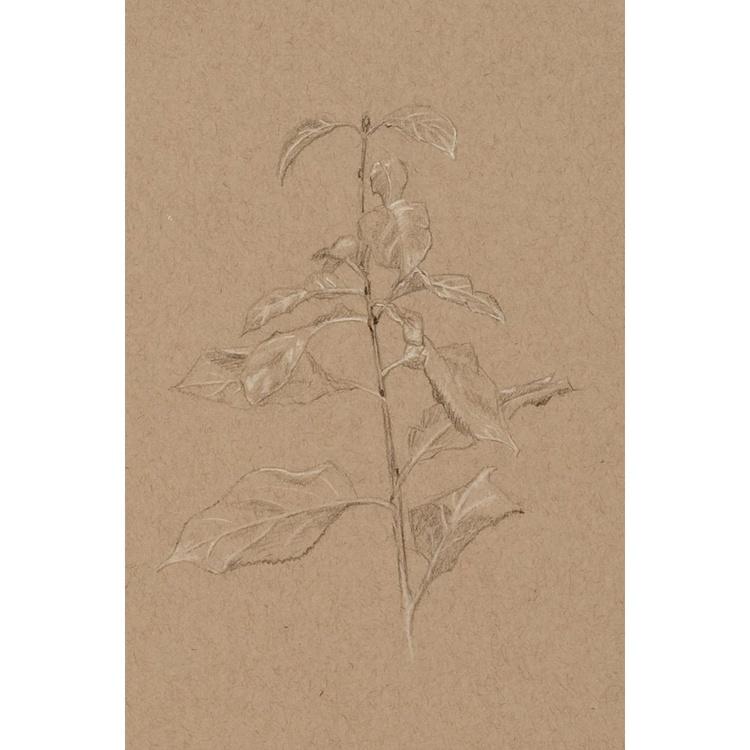 Plant Study - Image 0