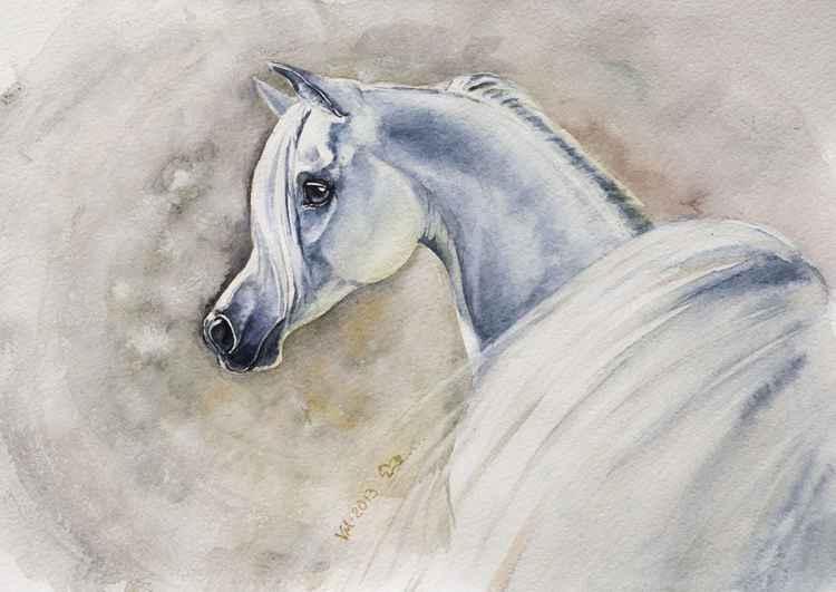 Young arabian horse -