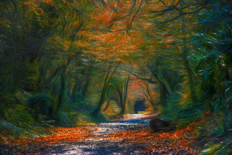 Walk In The Woods - Image 0