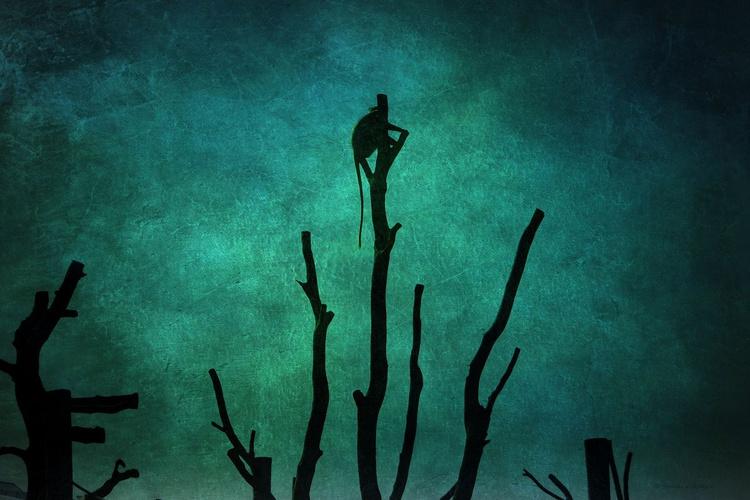 Night Watchman - Image 0