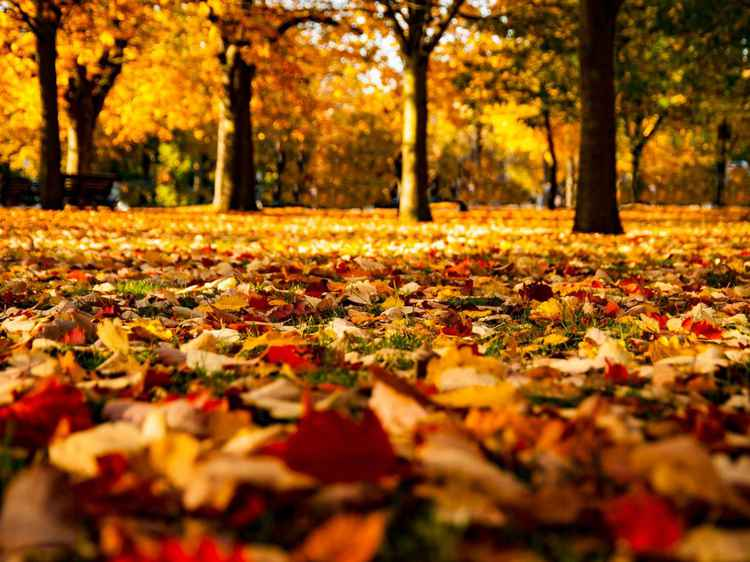 Autumn Colours -
