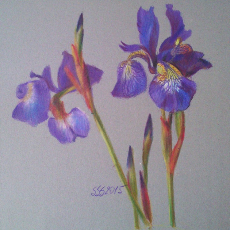 Iris - Image 0