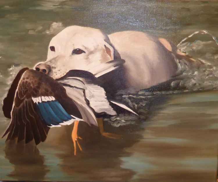 labrador and duck mallard