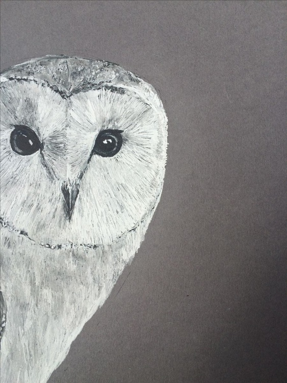 Barn Owl, Ink Portrait - Image 0