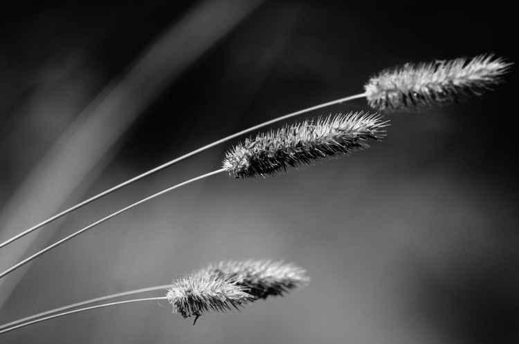 Mystical garden -