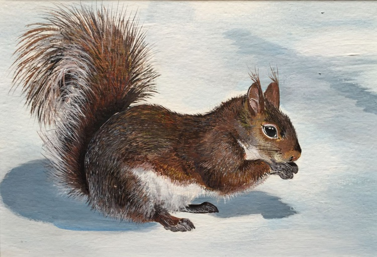 Winter woodland - Squirrel in the snow - Image 0