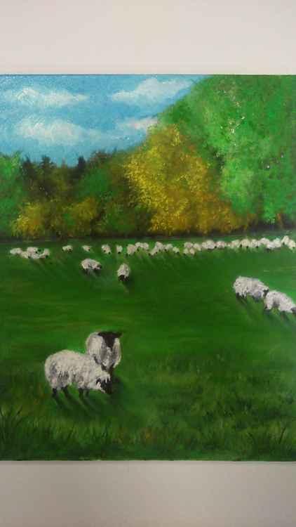 Sheepish -