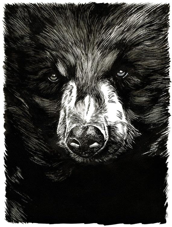 Black Bear (Ursus americanus) - Image 0
