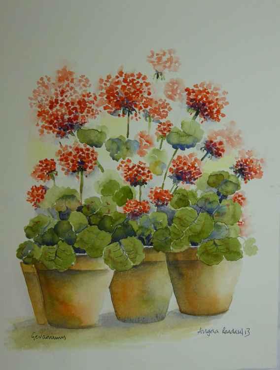 Geranium Pots -