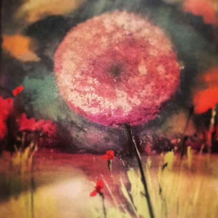 Pink dandelion -