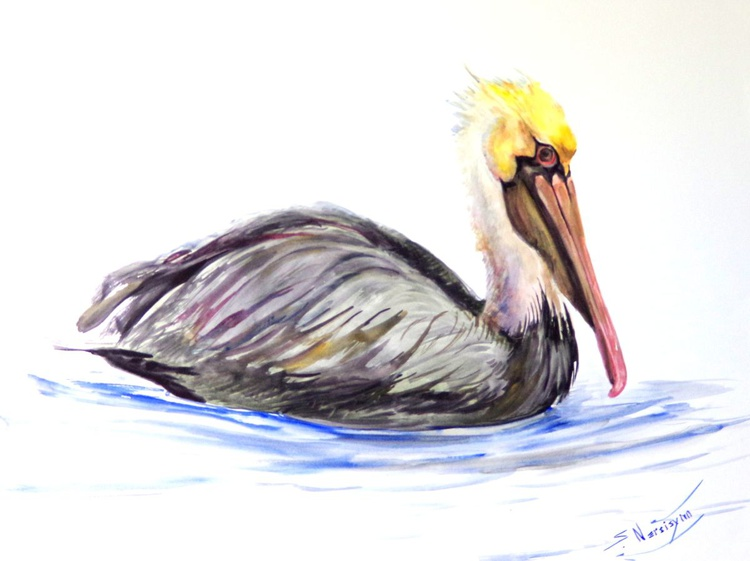 Brown Pelican - Image 0