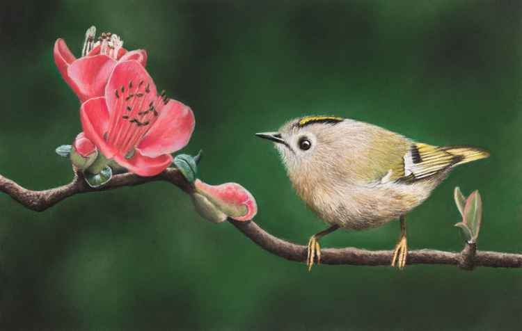 "Original pastel drawing ""Goldcrest"" -"