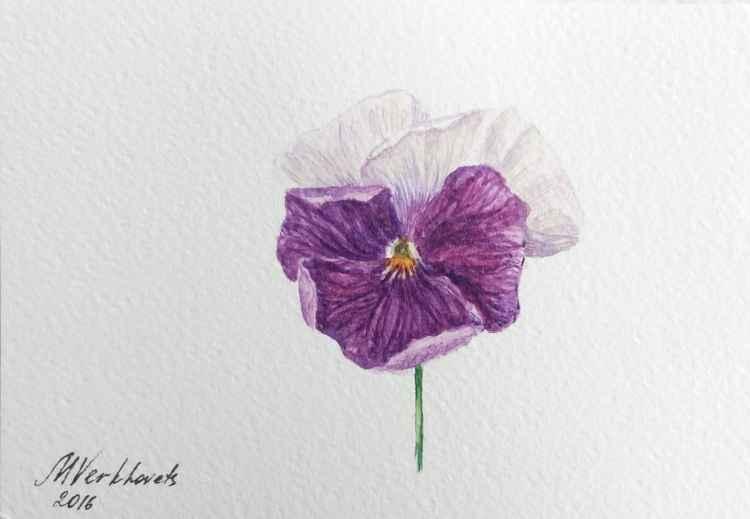Viola Flower. -