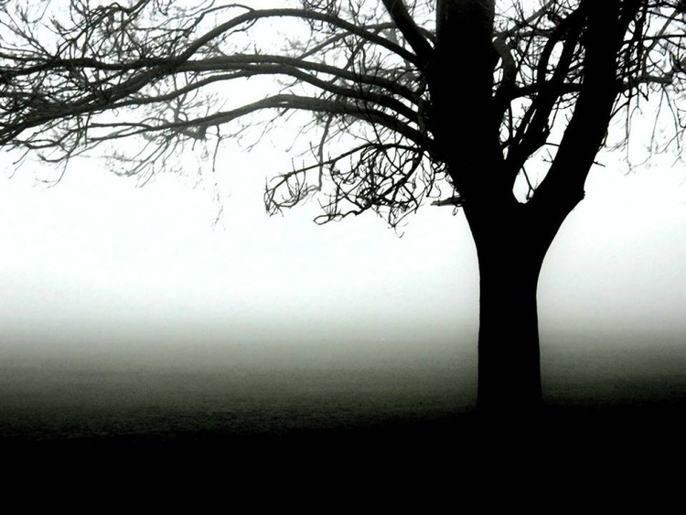 Misty Morning - Image 0