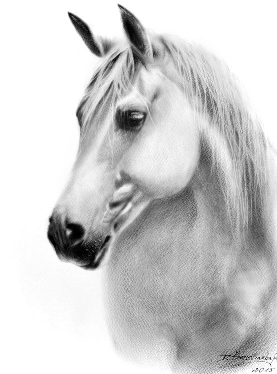 Beautiful Horse Libby - Image 0