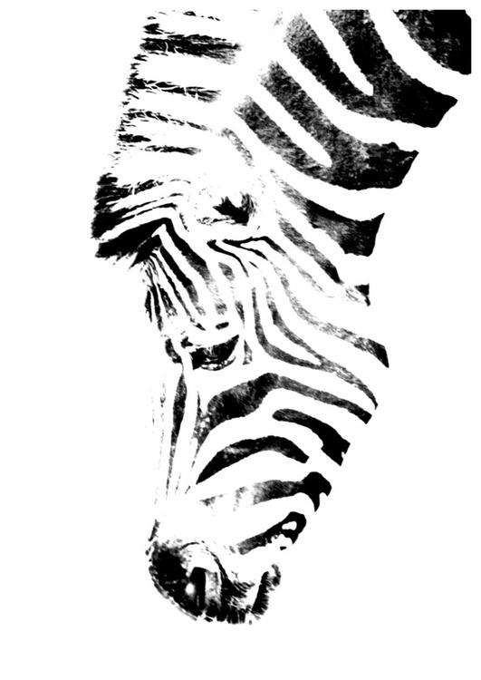 Zebra II - Image 0
