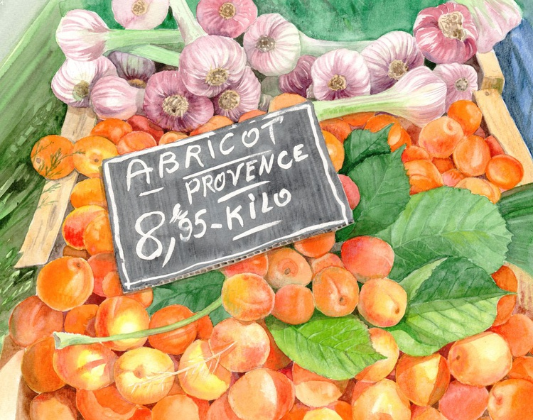 Apricots in an Open Air Market in Nice, France - Image 0