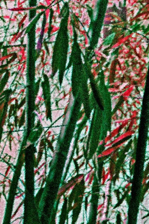 Bamboo Trees, Bangalore - Image 0