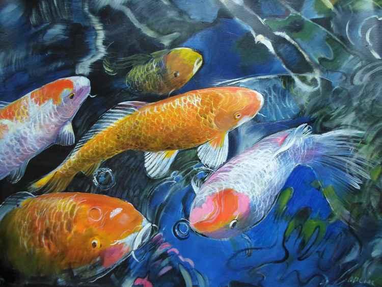 Koi Fish Pool -