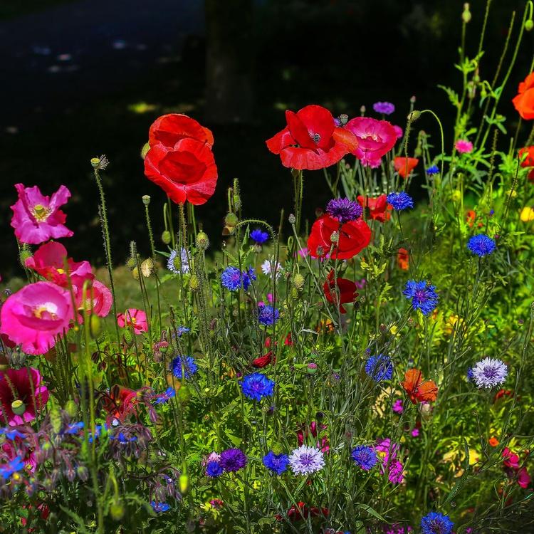 Spring To Keep - Image 0