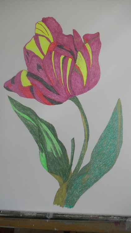 Tulip -