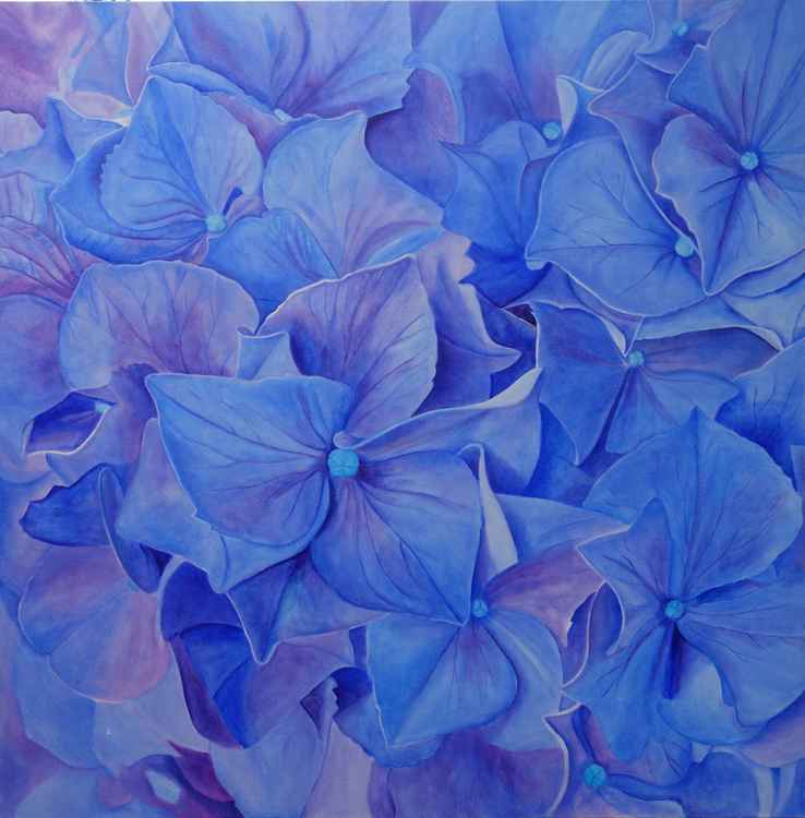 Young Hydrangea -