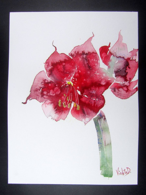 Red Amaryllis (Hippeastrum species) 1 - Image 0