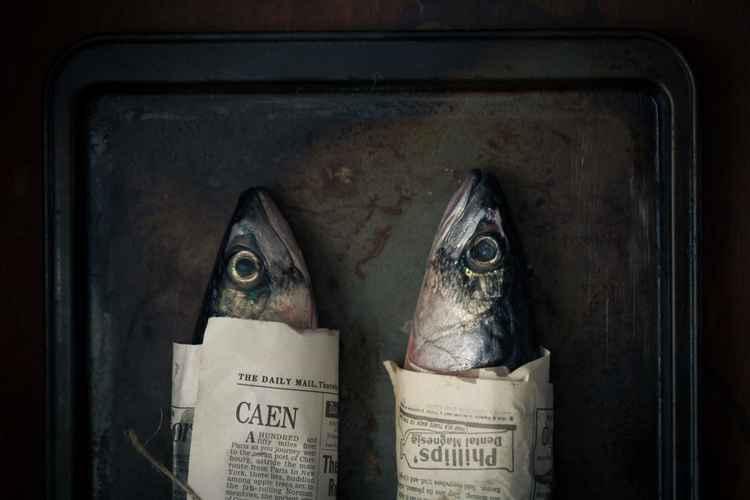 Mackerels -
