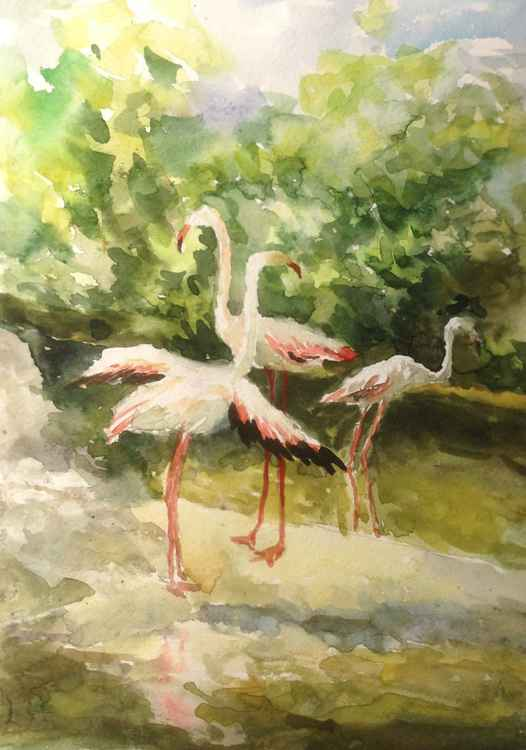 Flamingos. Zoo. etude 1 -