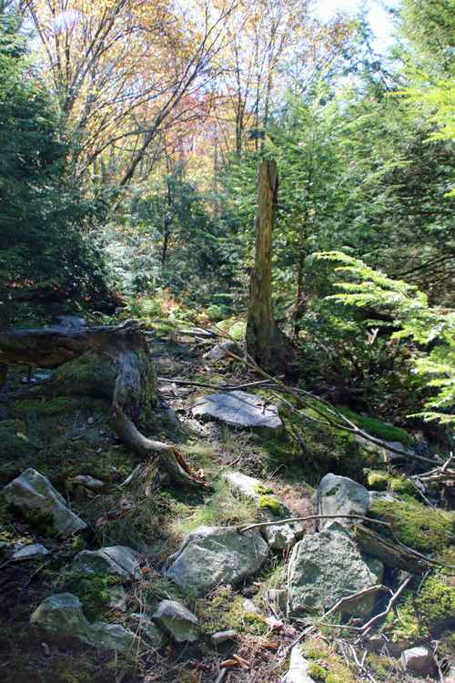 Secret Path -