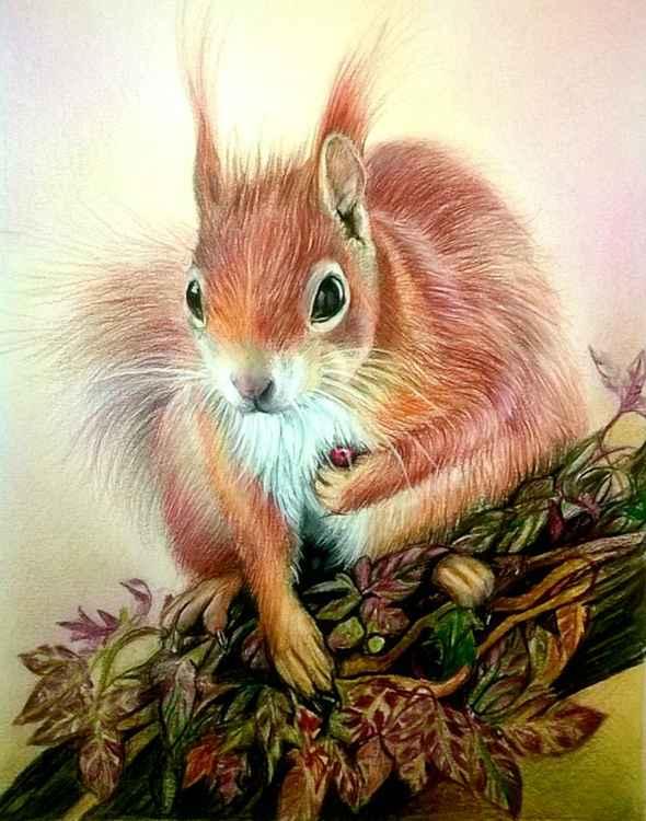 Eurasian Red Squirrel -
