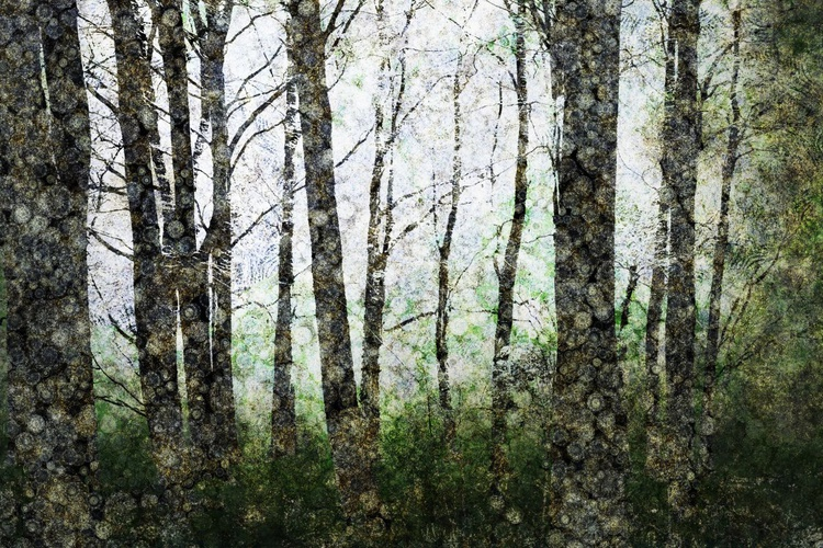 Forest First Light (Ltd Edition of only 20 Fine Art Giclee prints from original artwork) - Image 0