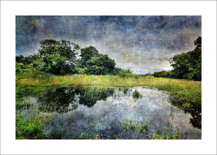 Trees and Reflections -