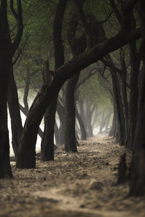 Road less travelled - Image 0