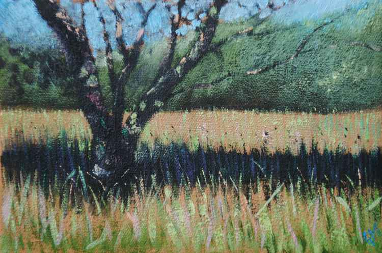 Cherry, Brynhir (#8 Postcards from Pembrokeshire)