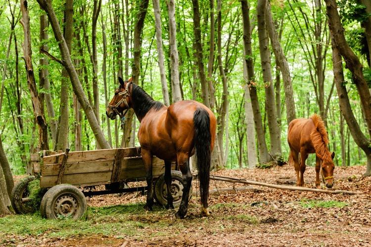 Transylvanian Horses. (119x84cm) - Image 0