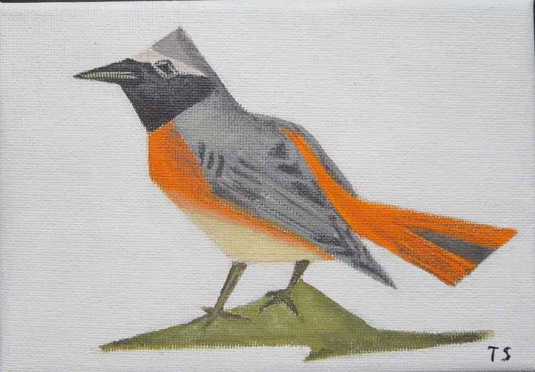 Common redstart -