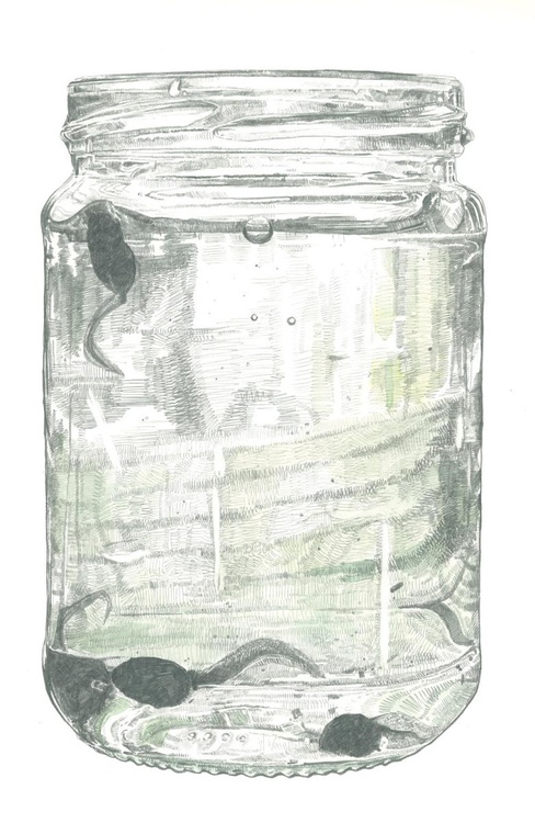 Tadpoles in a Jar - Image 0