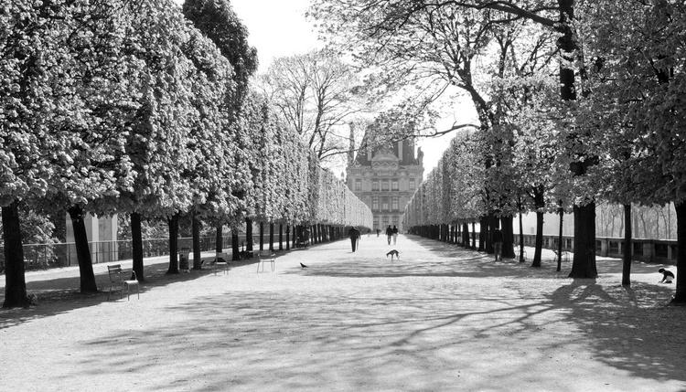 Jardin des Tuileries - Image 0