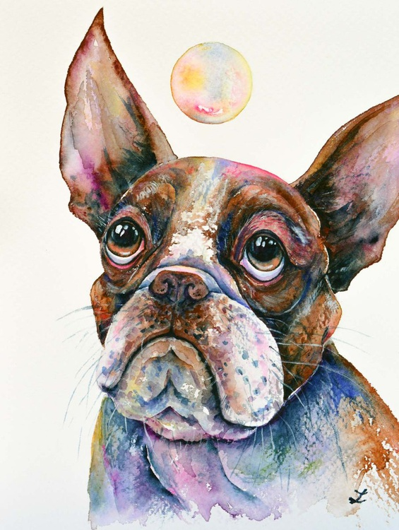 Boston Terrier Watching a Soap Bubble - Image 0