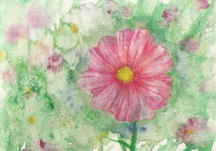 Cosmos flower -