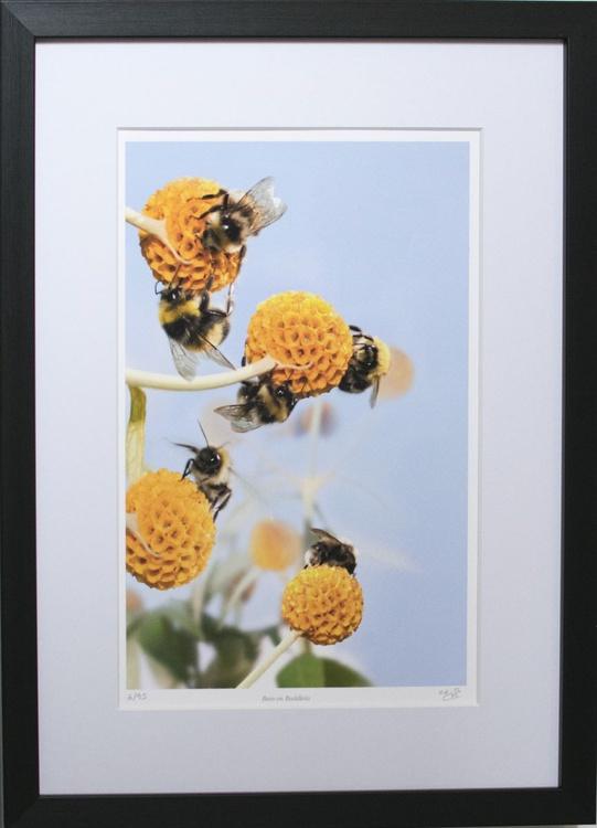 Bees on buddleia FRAMED 30 x 40cm - Image 0