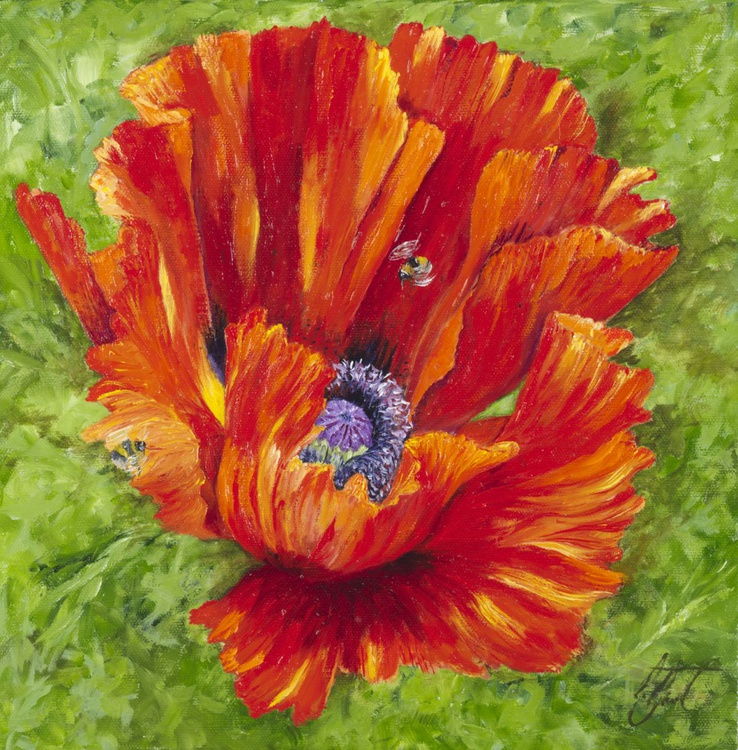 Red Poppy 3 - Image 0