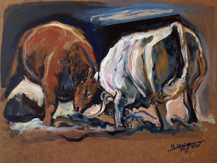 bulls fight - Image 0