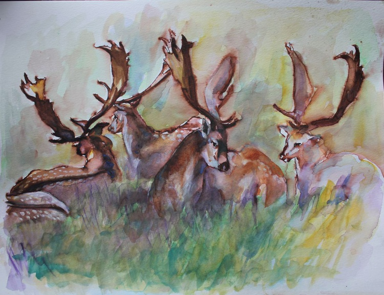 Young Bucks in the Afternoon Sun - Image 0
